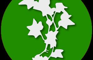 ivy-icon