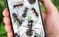 Ants on screen funny joke ICON